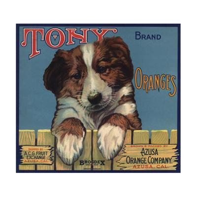 Tony Brand - Azusa, California - Citrus Crate Label by Lantern Press