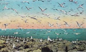 Utah, View of Sea Gulls Landing on the Great Salt Lake Shore by Lantern Press