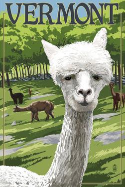 Vermont - Alpaca Scene by Lantern Press