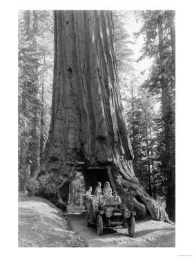 View of a Loaded Model-T Ford under Wawona Tree - Redwood National Park, CA by Lantern Press