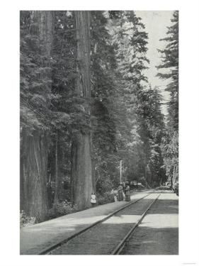 View of Big Tree Grove Park - Santa Cruz, CA by Lantern Press