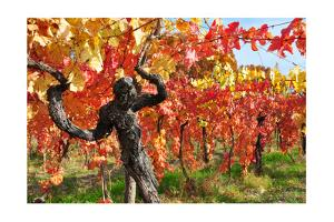 Vineyard Fall Colors by Lantern Press