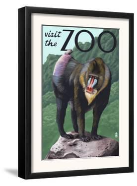 Visit the Zoo, Mandrill Scene by Lantern Press