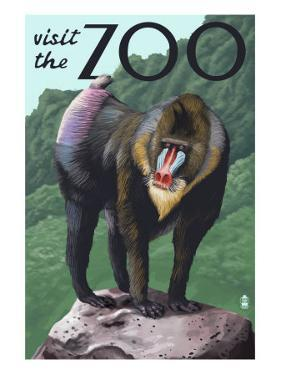 Visit the Zoo, Mandrill Scene by Lantern Press