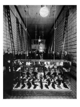 Wallin & Nordstrom Shoe Store - Seattle, Washington by Lantern Press