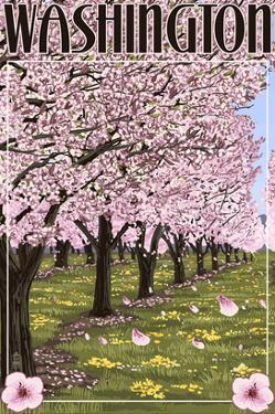 Washington - Cherry Blossoms by Lantern Press