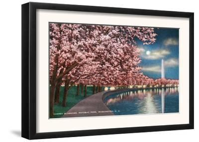 Washington DC, Potomac Park and Blossoming Cherry Trees Scene at Night by Lantern Press