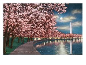 Washington DC, Potomac Park and Blossoming Cherry Trees Scene at Night by Lantern Press
