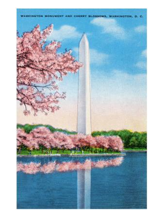 Washington DC, View of the Washington Monument through Blossoming Cherry Trees by Lantern Press