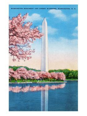 Washington DC, View of the Washington Monument through Blossoming Cherry Trees by Lantern Press