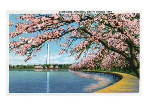 Washington DC, View of the Washington Monument with Blossoming Cherry Trees by Lantern Press