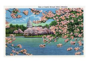 Washington DC, Vista of the Capitol through the Cherry Blossoms by Lantern Press