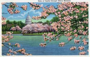 Washington DC, Vista of the Capitol through the Cherry Blossoms by Lantern Press