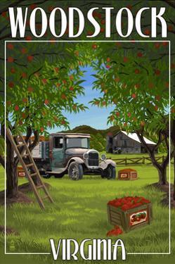 Woodstock, Virginia - Apple Harvest by Lantern Press