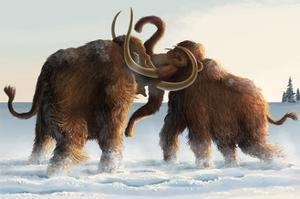 Wooly Mammoths by Lantern Press