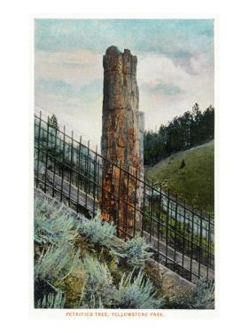 Yellowstone Nat'l Park, Wyoming - View of a Petrified Tree by Lantern Press