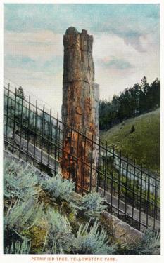 Yellowstone Nat'l Park, Wyoming - View of a Petrified Tree by Lantern Press