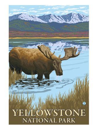 Yellowstone National Park - Moose Drinking in Lake by Lantern Press