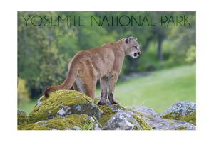 Yosemite National Park, California - Mountain Lion by Lantern Press
