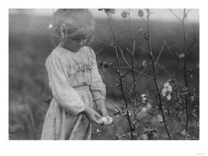 Young Black Girl Picking Cotton Photograph - Houston, TX by Lantern Press