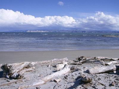 https://imgc.allpostersimages.com/img/posters/large-amount-of-driftwood-on-beach-haast-westland-west-coast-south-island-new-zealand_u-L-P1TPPX0.jpg?p=0