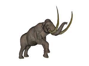 Large Mammoth, White Background