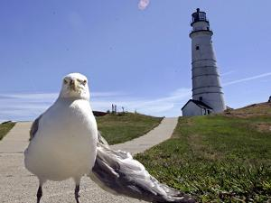 Larry, a Seagull