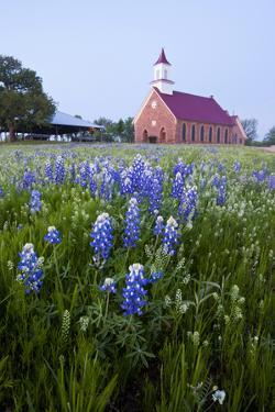 Art Methodist Church and Bluebonnets Near Mason, Texas, USA by Larry Ditto