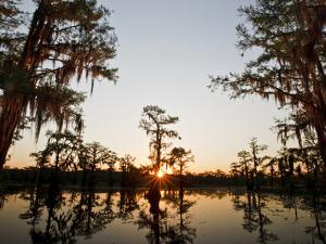 Caddo Lake at Sunrise, Marion Co., Texas, Usa by Larry Ditto