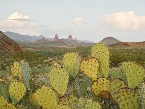 Mule Ears and Prickly Pear Cactus, Chisos Mountains, Big Bend National Park, Brewster Co., Texas, U by Larry Ditto