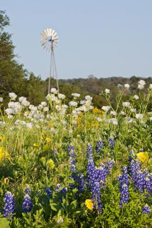 Wildflowers and Windmill in Texas Hill Country, Texas, USA by Larry Ditto