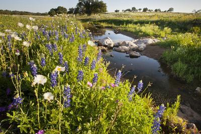 Wildflowers by Hill Country Stream, Texas, USA