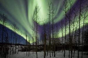 Aurora Borealis IX by Larry Malvin