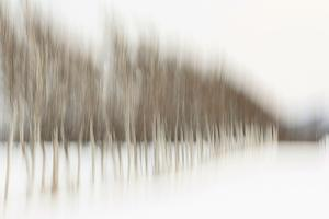 Birch Blur I by Larry Malvin