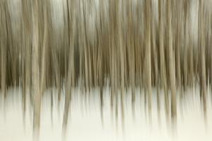 Birch Blur II by Larry Malvin