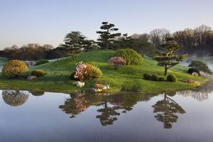 Botanic Dawn I by Larry Malvin