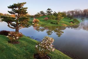 Botanic Dawn II by Larry Malvin