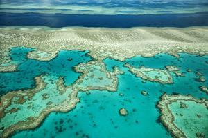 Coral River I by Larry Malvin