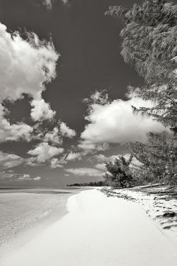 Deep Creek Tree BW by Larry Malvin