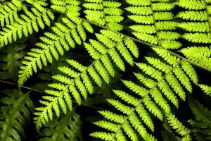 Fern Patterns by Larry Malvin