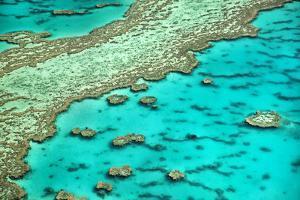 Great Barrier Reef I by Larry Malvin