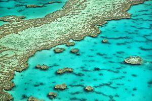 Great Barrier Reef I by Larry Malvin