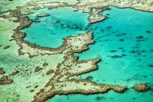 Great Barrier Reef III by Larry Malvin