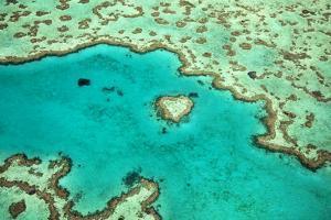 Great Barrier Reef IV by Larry Malvin