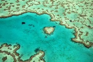 Great Barrier Reef IV by Larry Malvin