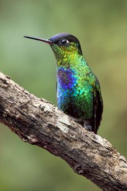 Hummingbird I by Larry Malvin