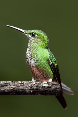 Hummingbird III by Larry Malvin