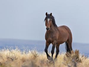 Cherokee - S Steens Wild Stallion by Larry McFerrin