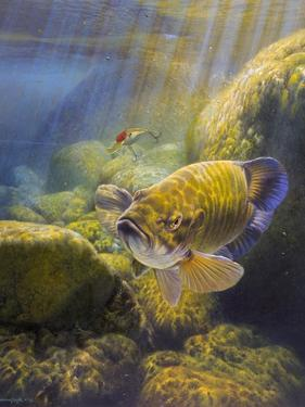 Smallmouth Bass by Larry Tople