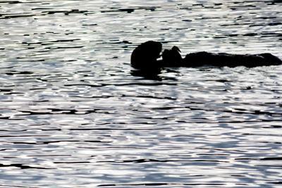 Black Lite Otter Eating Crab by Latitude 59 LLP